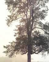 03-tree-in-for