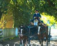 04-williamsburg-carriage